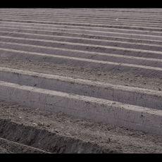 kartoffeln-pflanzen11